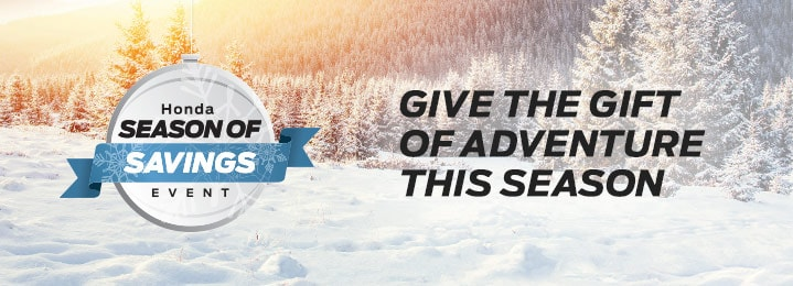 Give the gift of adventure this season. Forest in the winter.
